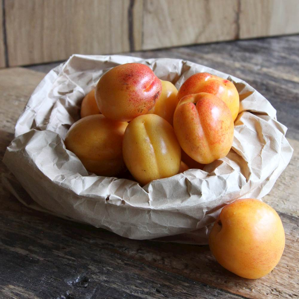Способы заготовки сушеного абрикоса и как хранить в домашних условиях