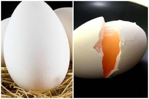 Польза и вред гусиных яиц, можно ли их есть?