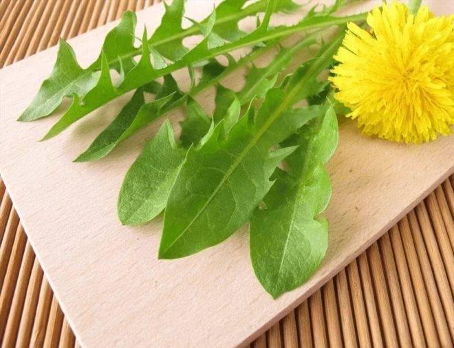 Одуванчик — лечебные свойства и противопоказания, польза и возможный вред применения. рецепты применения корня, цветков, листьев