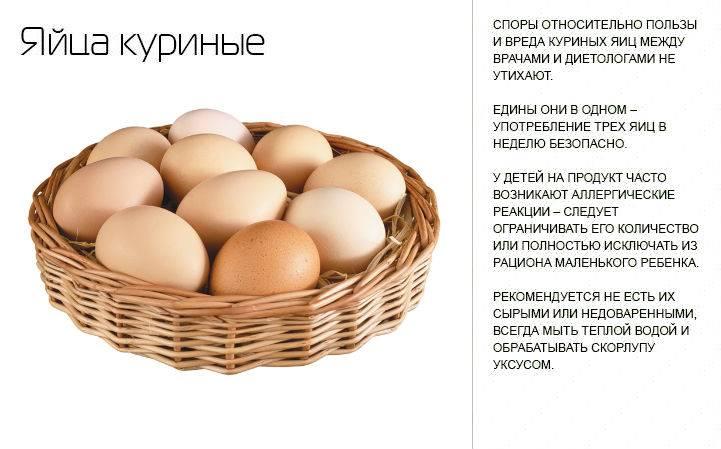 Куриные яйца польза и вред для здоровья организма человека