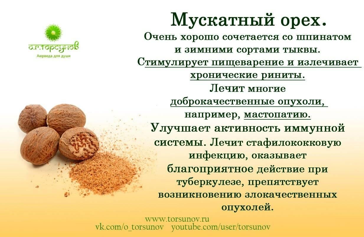Мускатный орех: полезные свойства и противопоказания для мужчин и женщин