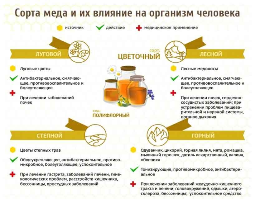 10 полезных свойств мёда для вашего здоровья и противопоказания его употребления