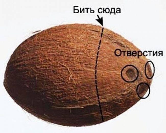 Как разделывать и употреблять кокос в домашних условиях