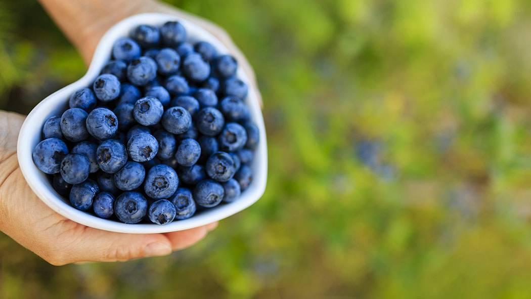 Черника: польза и вред для здоровья