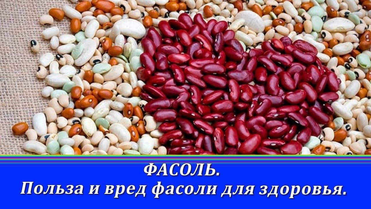 Польза и вред красной фасоли для организма человека