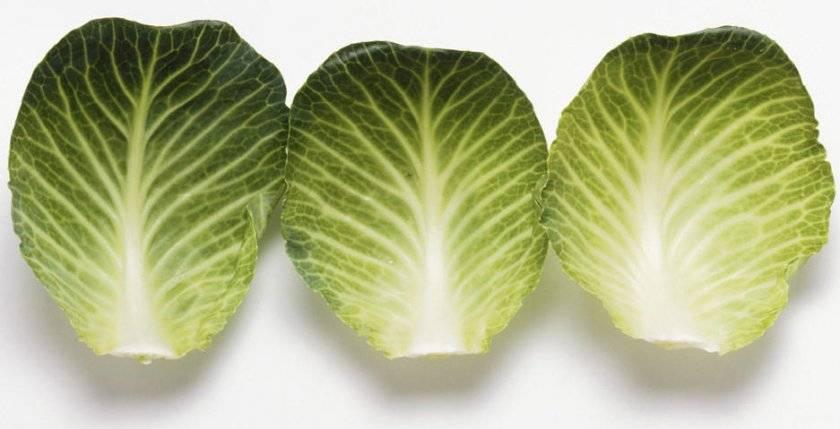 Лист капусты лечебные свойства для лечения