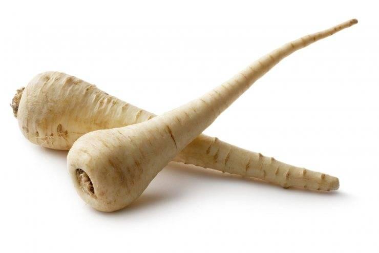 Польза и вред растения пастернак, свойства, как использовать в кулинарии