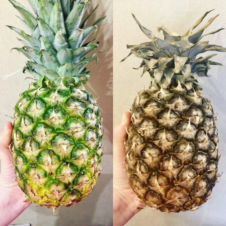 Как в домашних условиях хранить ананас?