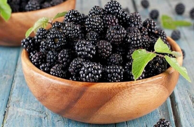 Шелковица — польза и вред для здоровья