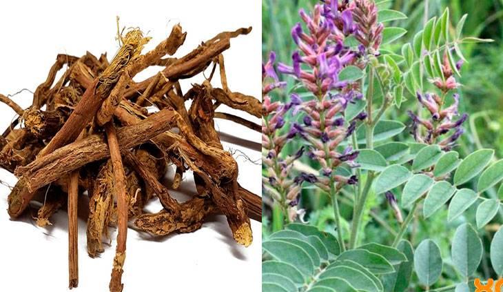 Лечебные свойства корня солодки. инструкция как принимать сироп. противопоказания