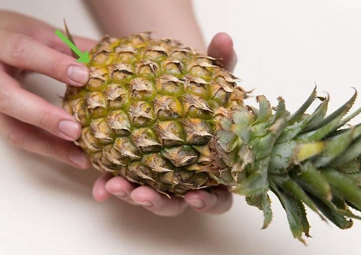 Как хранить ананас: 7 способов хранения и домашнее выращивание