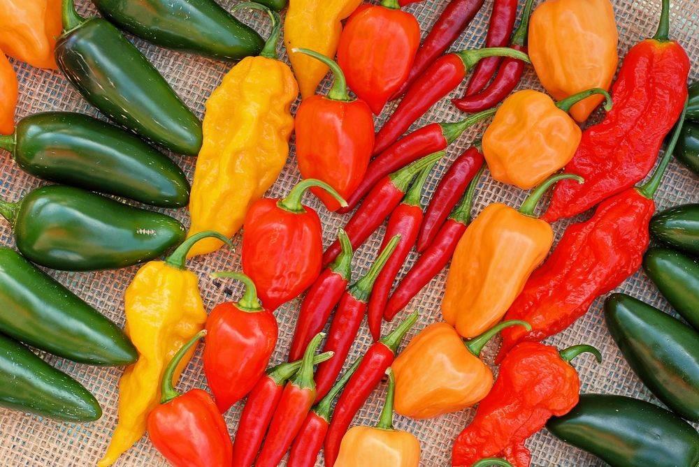 Обжигающий кайенский перец: что это такое и чем полезен для здоровья?