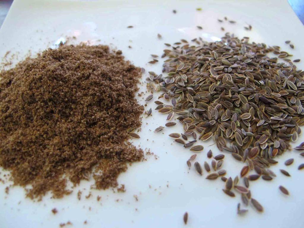 Семена укропа — польза и вред для здоровья