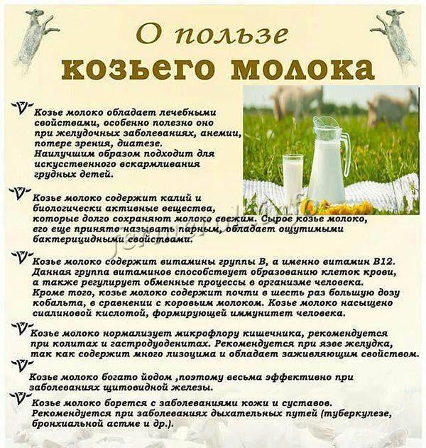 Козье молоко, польза и вред