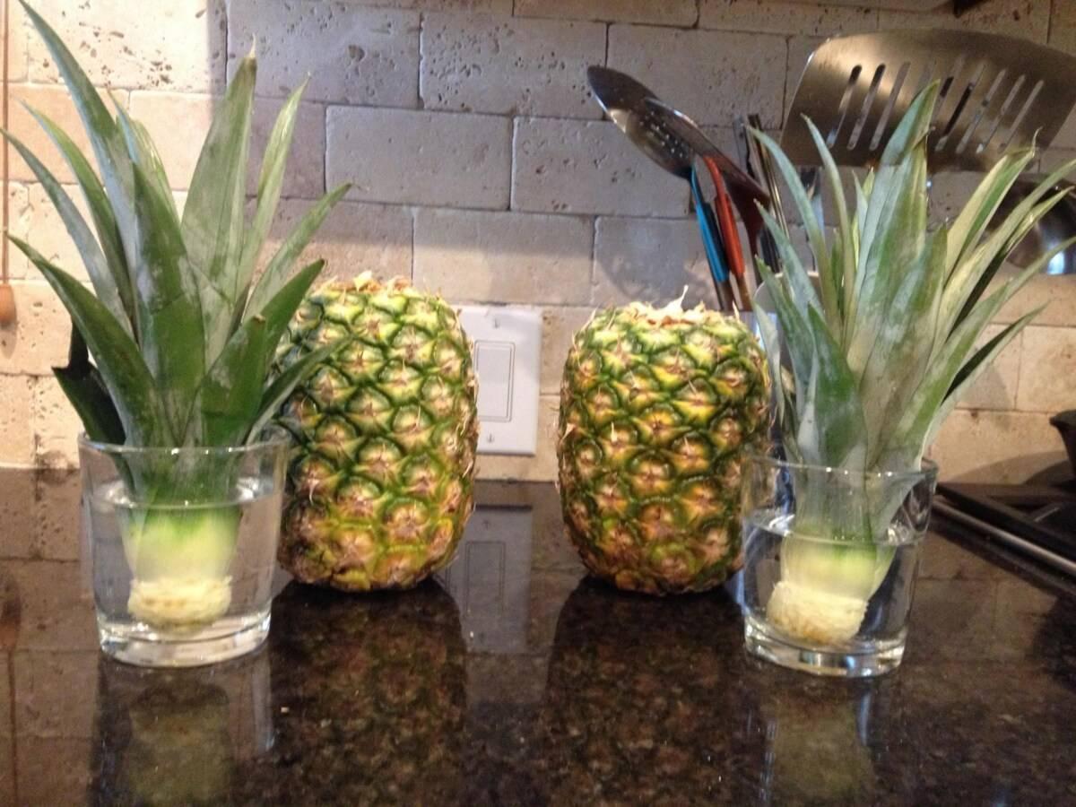 Как хранить ананас в домашних условиях? где хранить ананас