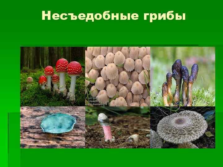 Чем полезны и вредны разные грибы для человеческого организма?