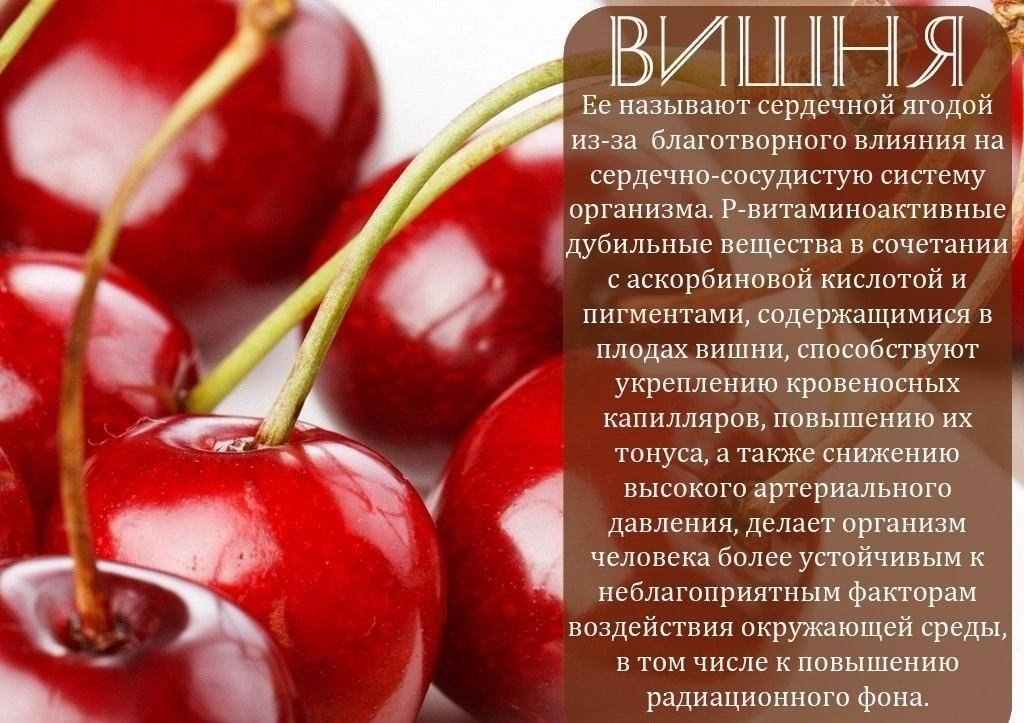 Вишня: «сердечная ягода» — состав, польза и вред, применение в лечебных целях