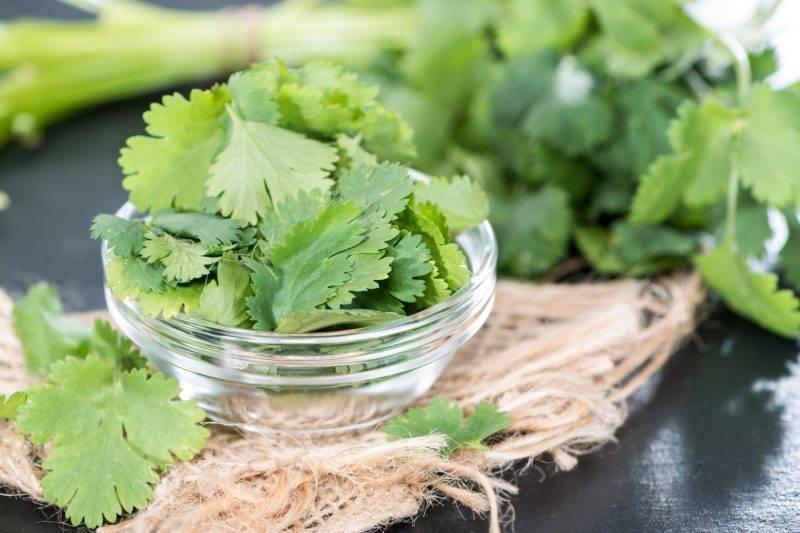 Кинза — кладезь витаминов и микроэлементов