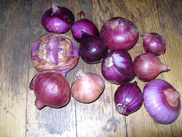 Ялтинский лук: польза и возможный вред для организма