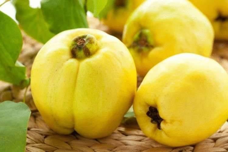 Японская айва: полезные свойства и противопоказания