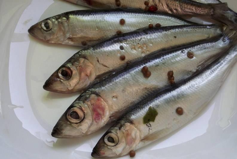 Рыба кефаль: польза и вред, химический состав, калорийность, фото
