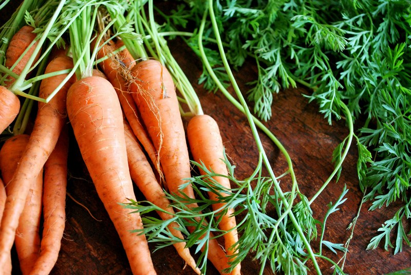 Ботва моркови: полезные свойства, противопоказания, польза и вред
