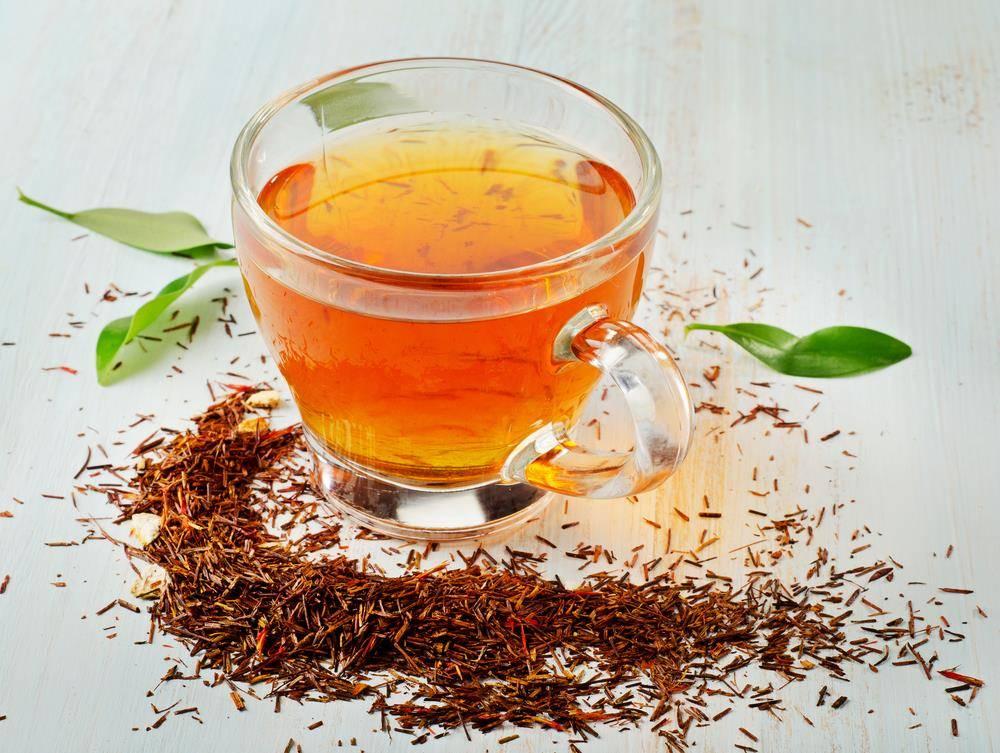 Африканский чай ройбуш: полезные свойства и противопоказания