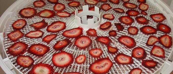 Сушат ли клубнику в сушилке. сушеная клубника: как правильно сушить клубнику на зиму в домашних условиях