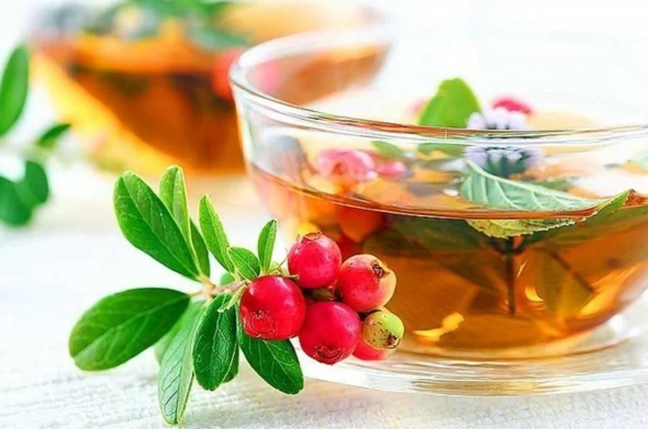 Чай из листьев брусники: польза и вред для организма человека