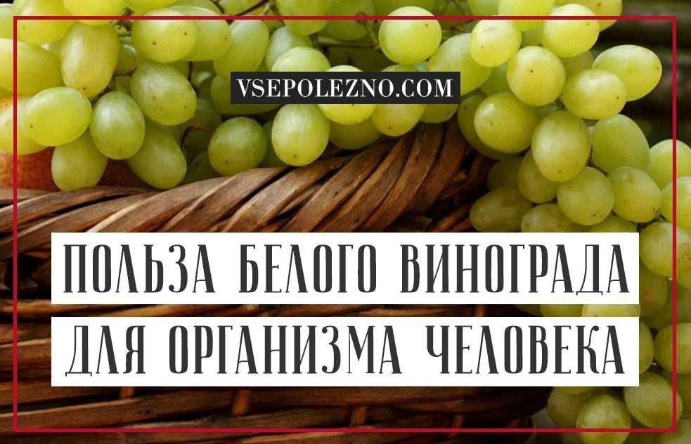 Виноград, польза и вред для организма человека
