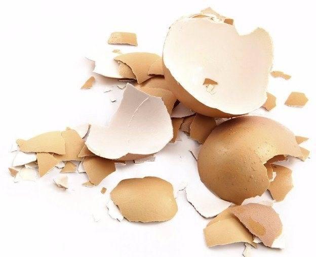 Вред и польза яичной скорлупы