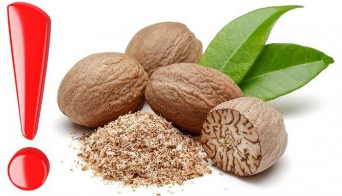 Мускатный орех: полезные свойства