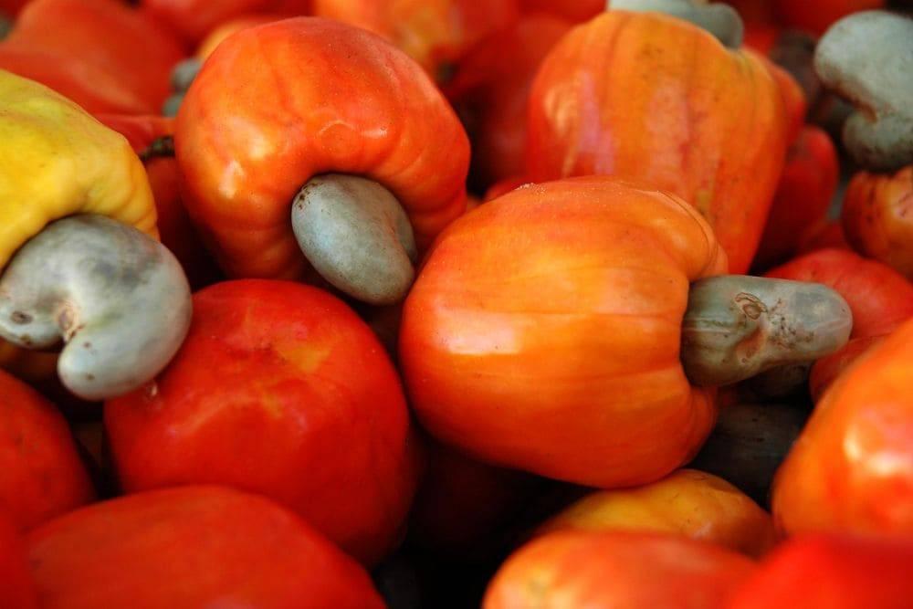 Орехи кешью – польза и вред