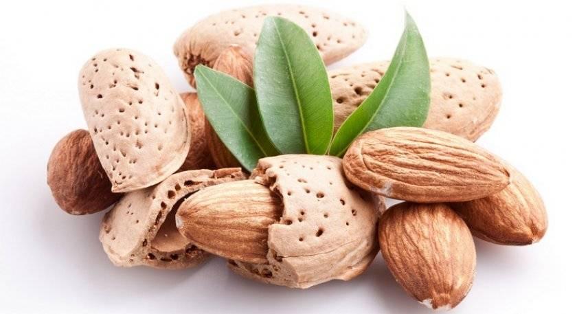 Польза и вред горького миндаля: отличие от сладкого сорта, как правильно применять