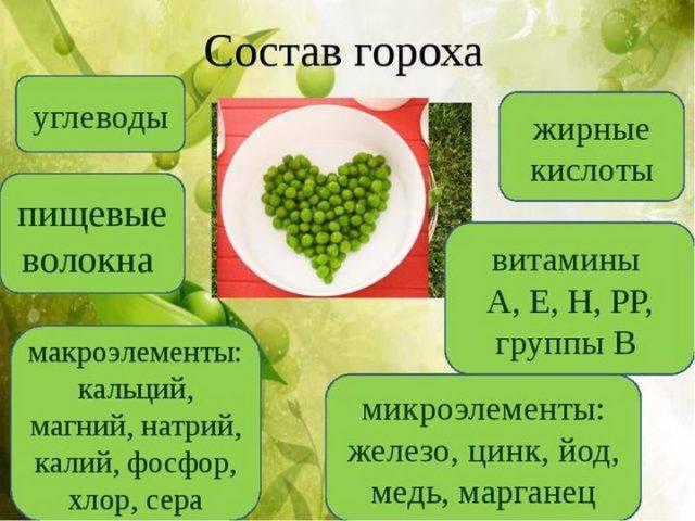 Польза гороха для нашего организма, свежий, пророщенный, консервированный, фото