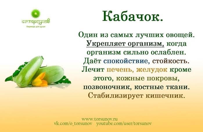 Польза и вред кабачков для здоровья организма