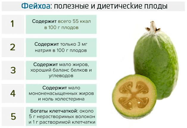 Плод от многих недугов — полезные свойства и противопоказания фейхоа