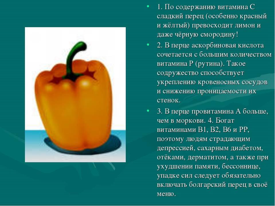 Польза и вред болгарского перца для организма