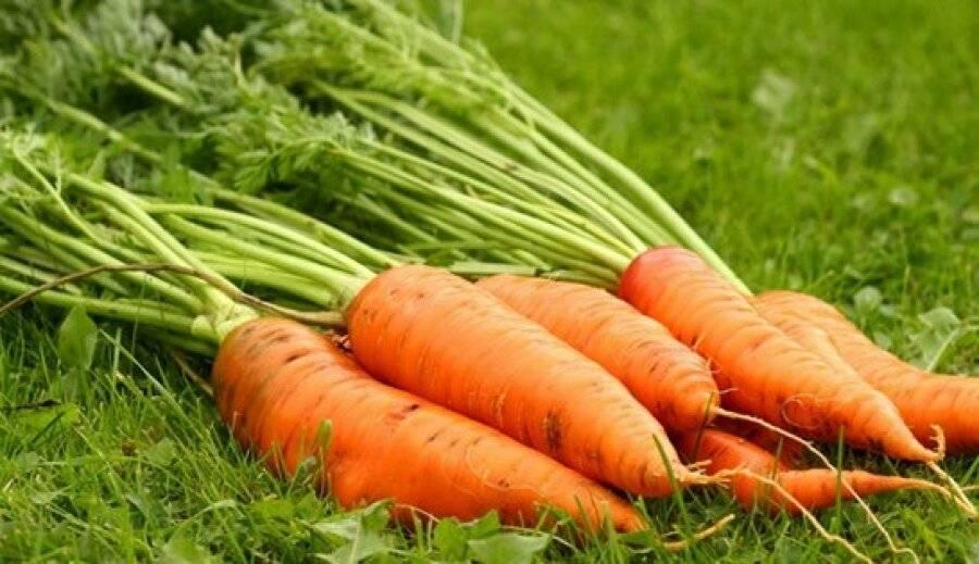 Можно ли употреблять ботву моркови: её полезные свойства и противопоказания