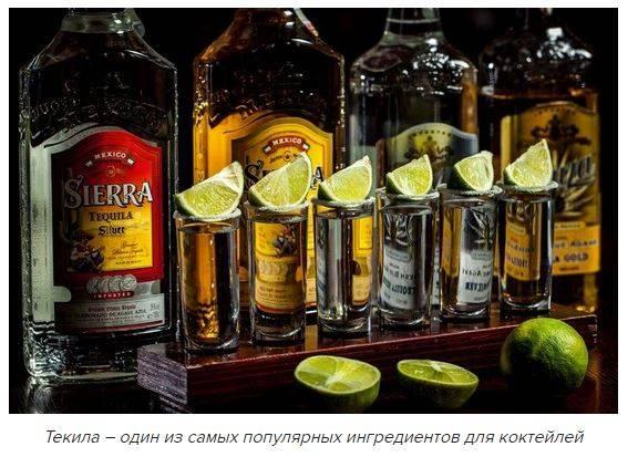 Как пить текилу. топ 7 способов
