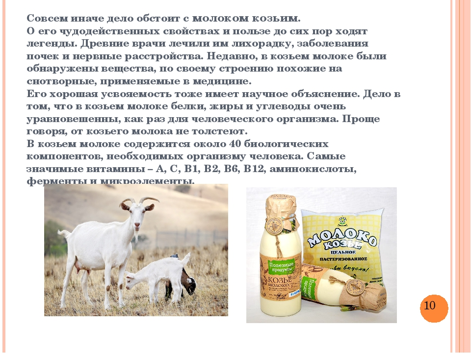 Польза и вред козьего молока, вся правда о молочном напитке