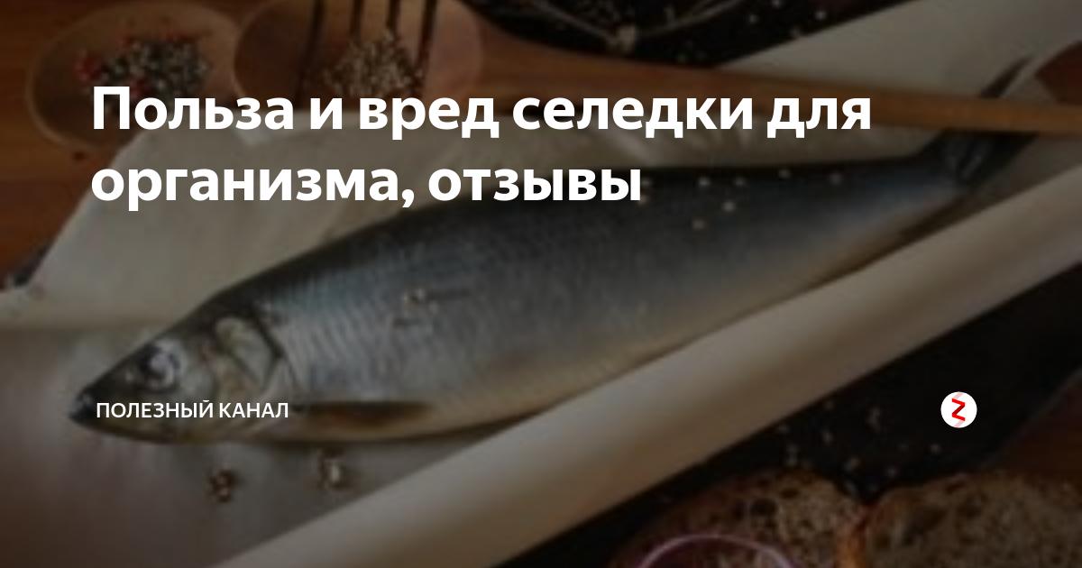 Сельдь соленая: польза и вред для здоровья. рецепты вкусной рыбки
