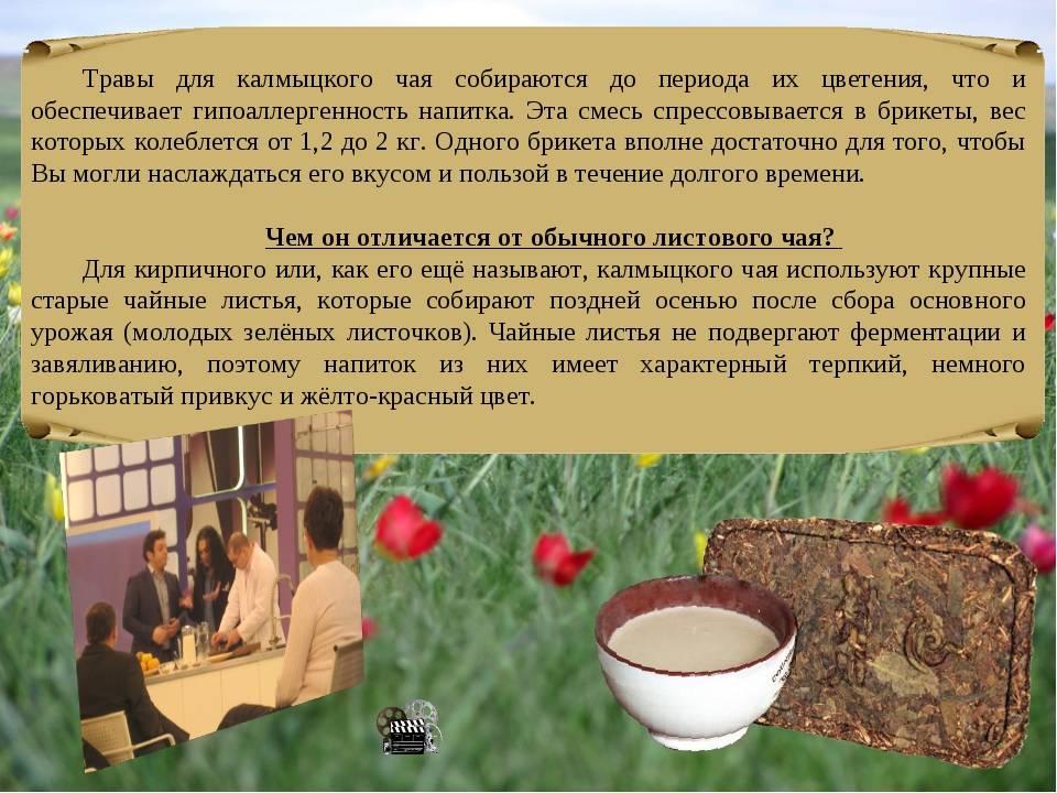 Калмыцкий чай польза и вред