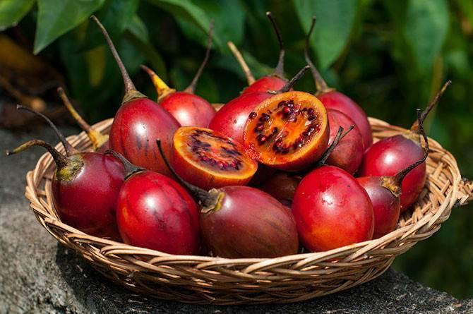 Тропическая маракуйя и ее полезные свойства для здоровья, способы приготовления, меры предосторожности