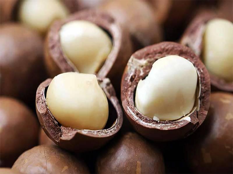 Австралийские орехи макадамия. польза и вред для организма, сколько можно есть, калорийность, противопоказания