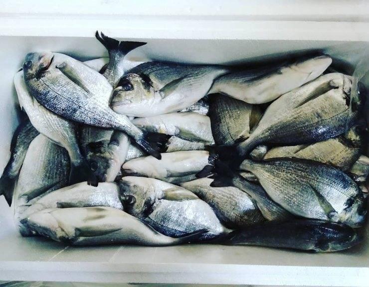 Рыба дорадо: польза и вред, фото, как приготовить