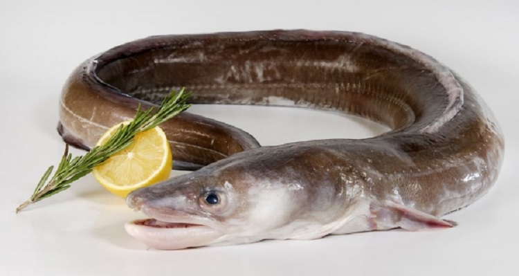 Осетр: состав, польза рыбы. как приготовить осетра в домашних условиях