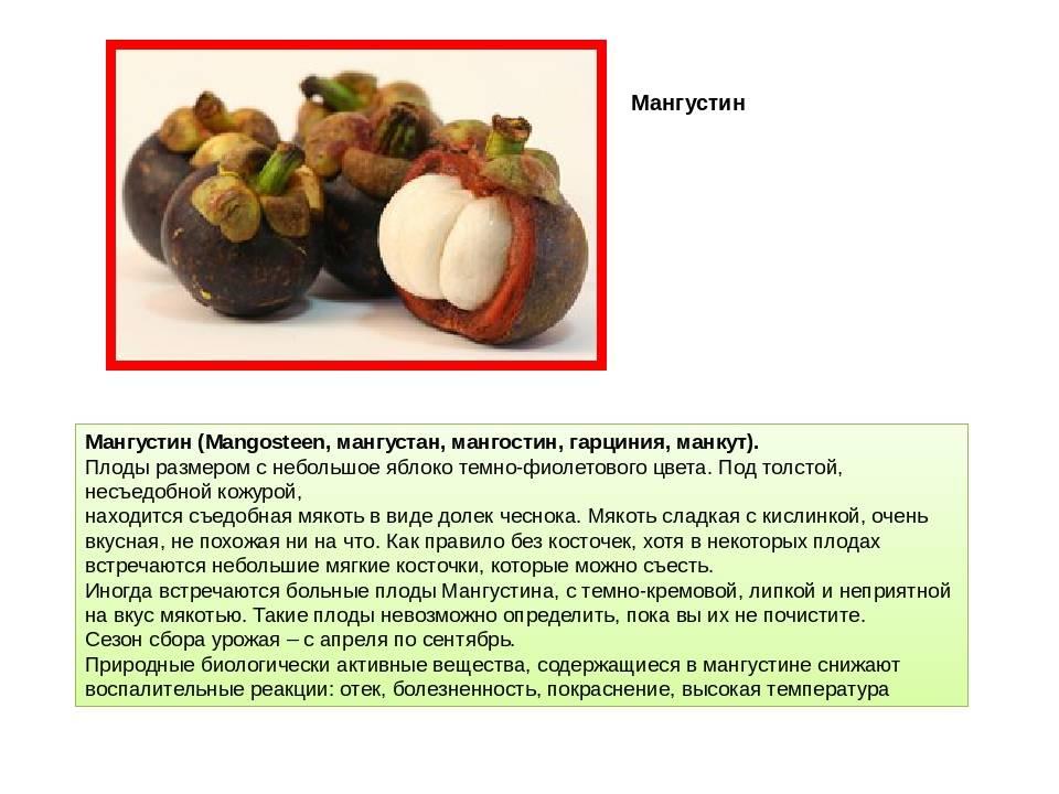 Вред, польза, противопоказания и условия хранения мангостина (мангостана)