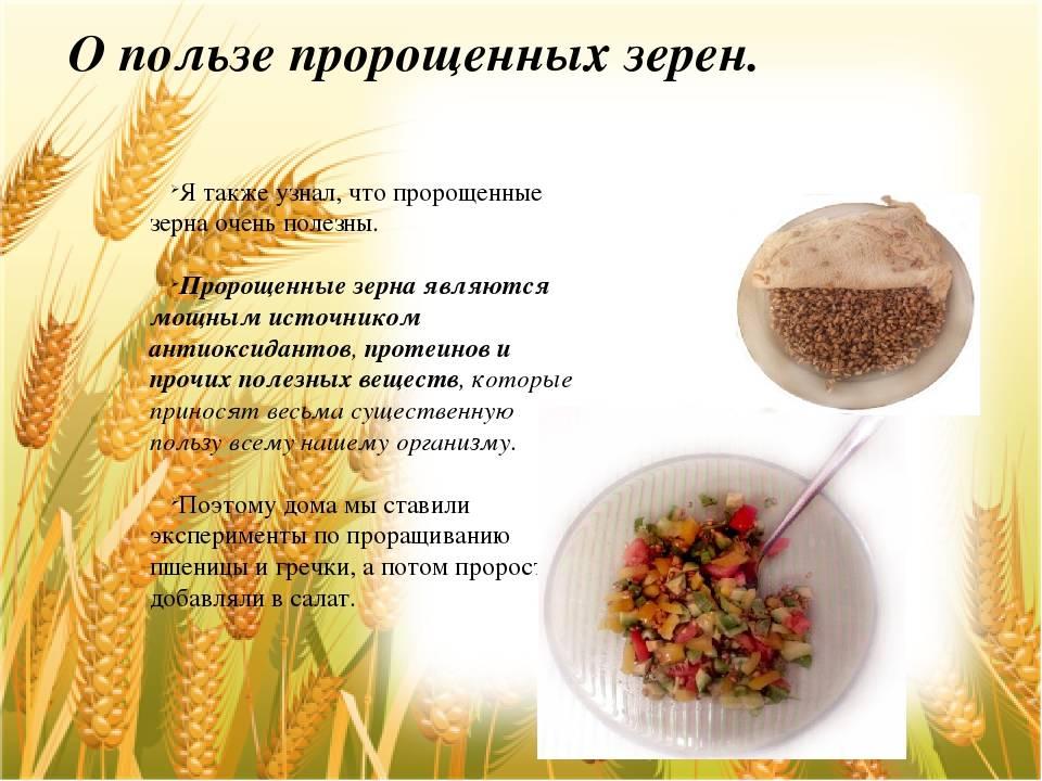 Пророщенная пшеница – удивительная живая пища