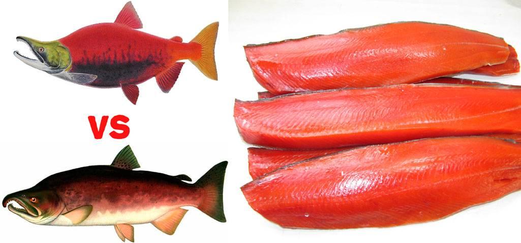 Рыба кижуч польза и вред